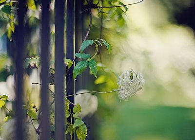 nature, flowers, fences, bokeh, depth of field - desktop wallpaper