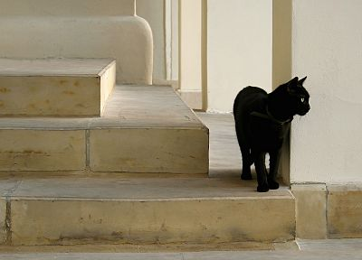 cats, stairways - random desktop wallpaper