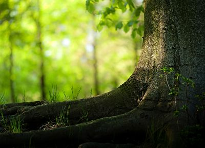 nature, trees, forests, depth of field - random desktop wallpaper