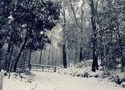 landscapes, nature, winter, snow, trees, fences, forests - desktop wallpaper