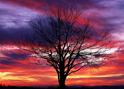 sunset, trees, red, silhouettes, National Park, shenandoah - desktop wallpaper