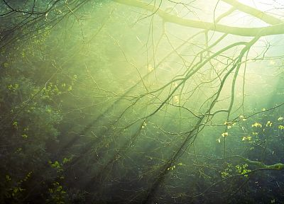 landscapes, nature, trees, forests, shadows, sunlight, branches - random desktop wallpaper
