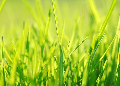 nature, grass - desktop wallpaper
