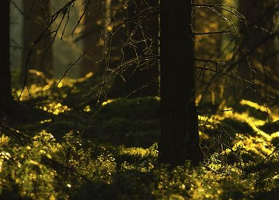 nature, trees, forests, grass, plants - related desktop wallpaper