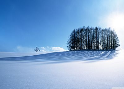 landscapes, winter, snow, trees, sunlight, snow landscapes - desktop wallpaper
