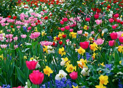 multicolor, flowers, spring, tulips - random desktop wallpaper