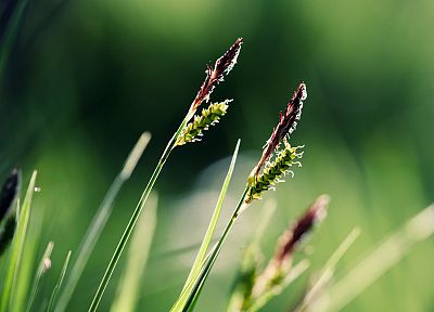 nature, grass, macro - related desktop wallpaper