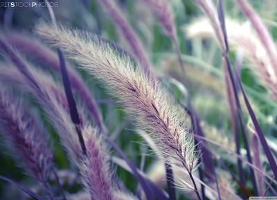 nature, plants, macro, depth of field - random desktop wallpaper