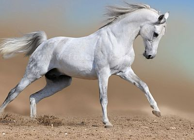 landscapes, nature, animals, horses - related desktop wallpaper