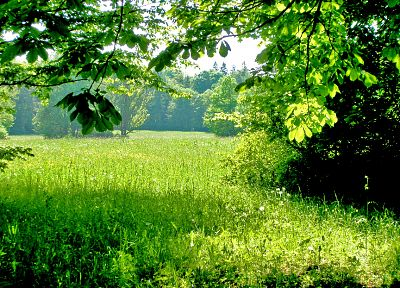 green, nature, trees, forests, leaves, grass, fields, summer, woods - desktop wallpaper