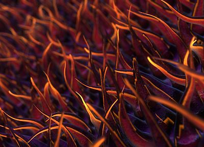 close-up, 3D view, abstract, grass, CGI, plants, 3D renders, 3D - desktop wallpaper
