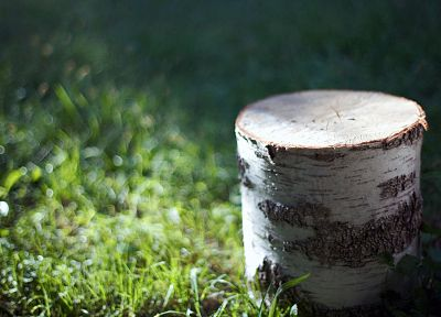 wood, grass, depth of field - random desktop wallpaper