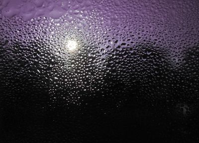 water, purple, wet, water drops, condensation - desktop wallpaper