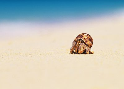 animals, macro, hermit crabs - random desktop wallpaper