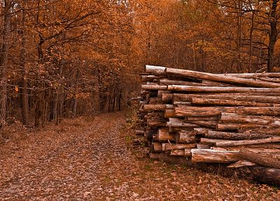 nature, trees, autumn, leaves, paths, logs - related desktop wallpaper
