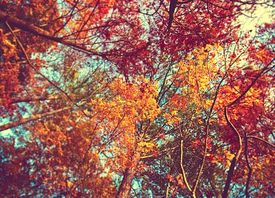 trees, autumn - random desktop wallpaper