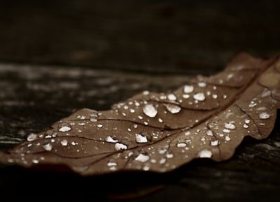 leaves, dew, fallen leaves - random desktop wallpaper