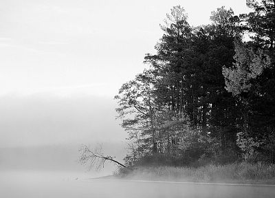coast, trees, wood, forests, shore, fog, grayscale, monochrome - random desktop wallpaper