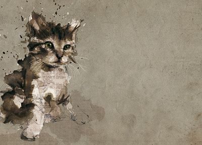 cats, animals, gray, kittens - related desktop wallpaper