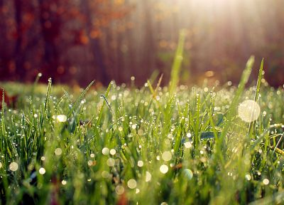 nature, grass, water drops, macro, morning, depth of field - related desktop wallpaper