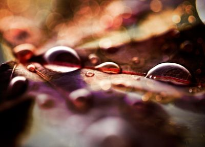 nature, water drops, macro - random desktop wallpaper
