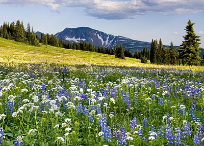 mountains, landscapes, flowers, meadows - desktop wallpaper