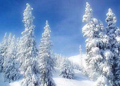 landscapes, nature, winter, snow, trees, blue skies - desktop wallpaper