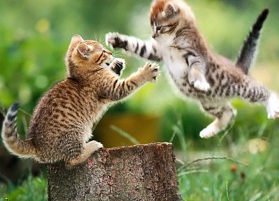 cats, animals, grass, kittens, tree trunk - related desktop wallpaper