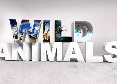 animals, wildlife - desktop wallpaper