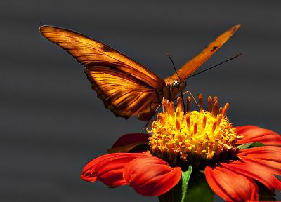 nature, flowers, macro, butterflies - desktop wallpaper