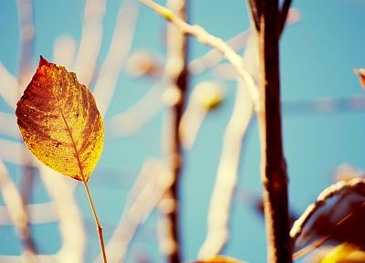 nature, autumn, leaves, blurred background - random desktop wallpaper
