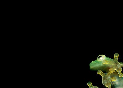 frogs, black background, amphibians - random desktop wallpaper