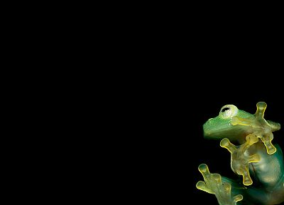 frogs - random desktop wallpaper