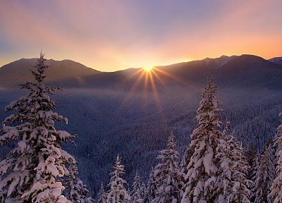 sunset, landscapes, winter, trees - desktop wallpaper