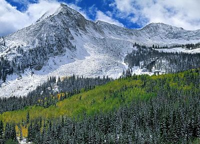 landscapes, snow, autumn, forests, west, national, Colorado, range, elk - related desktop wallpaper