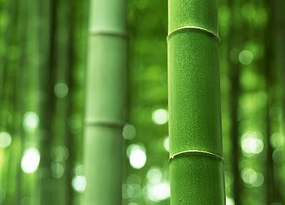 bamboo - random desktop wallpaper