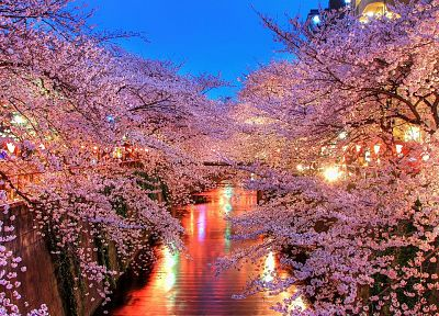 cherry blossoms, trees, pink - related desktop wallpaper