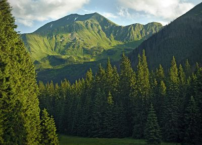 mountains, clouds, landscapes, trees, forests, Europe, Poland, evergreens - related desktop wallpaper