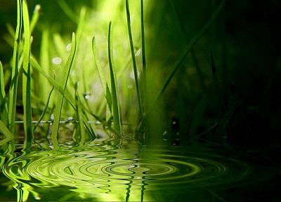 water, nature, grass - random desktop wallpaper