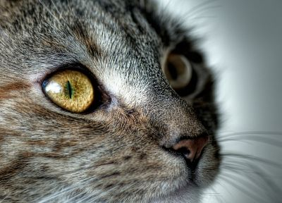 close-up, cats, animals - related desktop wallpaper