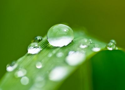 green, nature, grass, plants, water drops, depth of field, dew - random desktop wallpaper