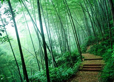 nature, trees, forests, bamboo, paths - desktop wallpaper