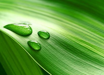 green, nature, leaves, water drops, macro - desktop wallpaper