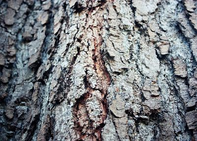 nature, trees, bark, depth of field - desktop wallpaper