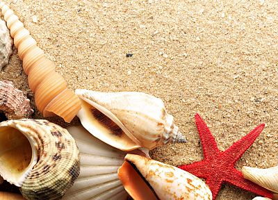 sand, shells, starfish, beaches - desktop wallpaper