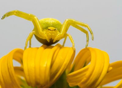 animals, insects, camouflage, spiders, arachnids - related desktop wallpaper