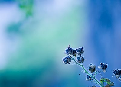 minimalistic, flowers, blue flowers, blurred background - random desktop wallpaper