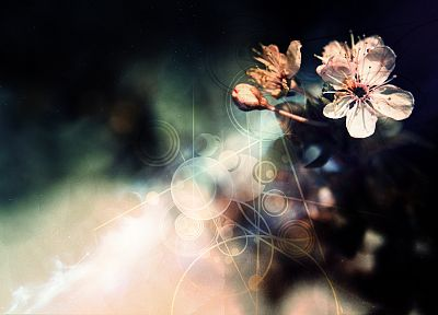 flowers, photo manipulation - desktop wallpaper
