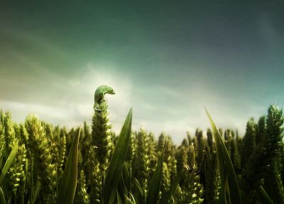 landscapes, nature, artistic, fields, wheat, lizards, photo manipulation - related desktop wallpaper
