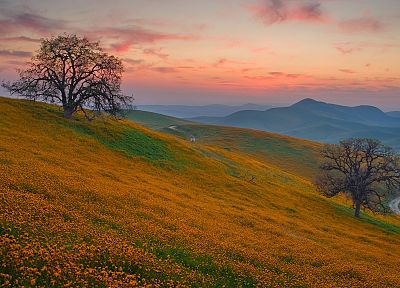 mountains, landscapes, trees, flowers - related desktop wallpaper